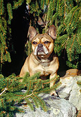 DOG 05 JN0003 01