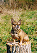 DOG 05 JN0005 01