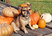 DOG 05 JN0006 01