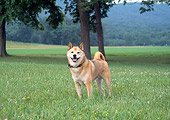 DOG 05 JN0007 01