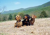 DOG 05 JN0009 01