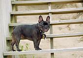 DOG 05 JN0011 01