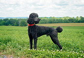 DOG 05 JN0013 01