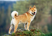 DOG 05 KH0022 01