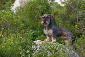 DOG 05 KH0028 01