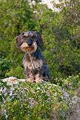 DOG 05 KH0029 01
