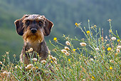 DOG 05 KH0031 01