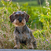 DOG 05 KH0032 01