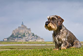 DOG 05 KH0038 01