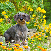 DOG 05 KH0040 01