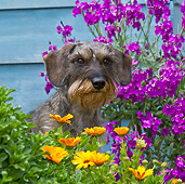 DOG 05 KH0041 01