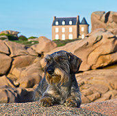 DOG 05 KH0044 01