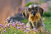 DOG 05 KH0046 01