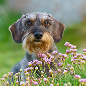 DOG 05 KH0047 01