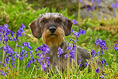 DOG 05 KH0052 01