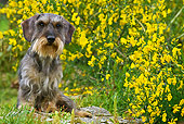 DOG 05 KH0053 01
