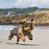 DOG 05 KH0056 01