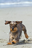 DOG 05 KH0058 01