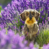 DOG 05 KH0066 01