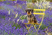 DOG 05 KH0067 01