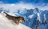 DOG 05 KH0074 01