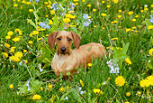 DOG 05 LS0004 01
