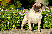 DOG 05 LS0006 01