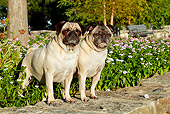 DOG 05 LS0007 01