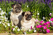 DOG 05 LS0008 01