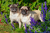 DOG 05 LS0009 01