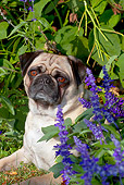 DOG 05 LS0010 01