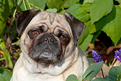 DOG 05 LS0011 01