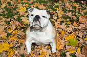 DOG 05 LS0014 01