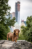 DOG 05 MQ0099 01