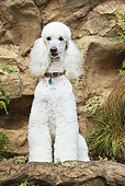 DOG 05 NR0010 01