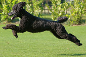DOG 05 NR0012 01