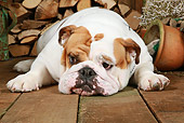 DOG 05 NR0016 01