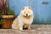 DOG 05 NR0018 01