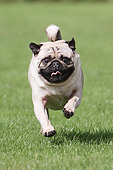 DOG 05 NR0022 01