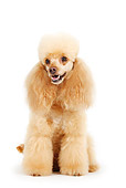 DOG 05 PE0005 01