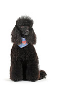 DOG 05 PE0006 01