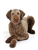 DOG 05 PE0010 01