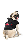 DOG 05 PE0015 01