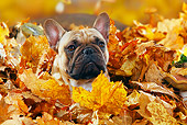 DOG 05 PE0017 01