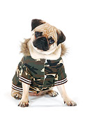 DOG 05 PE0020 01