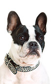 DOG 05 PE0021 01