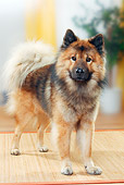 DOG 05 PE0023 01