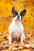 DOG 05 PE0025 01
