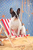 DOG 05 PE0027 01