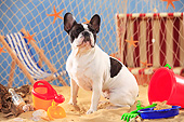 DOG 05 PE0028 01